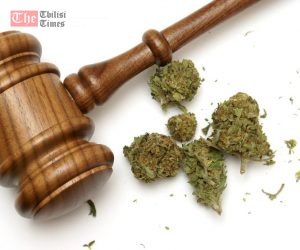 16834424 - marijuana and a gavel together for many legal concepts on the drug.