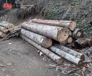 იანვრის თვეში ხე-ტყის უკანონო მოპოვებისა და ტრანსპორტირების 420 ფაქტი გამოვლინდა