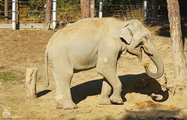 თბილისის ზოოპარკის სპილოს მთელი მსოფლიო გაიცნობს